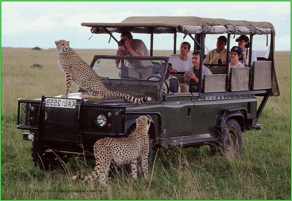 safari v kenii