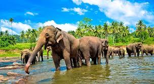 Шри-Ланка из Краснодара